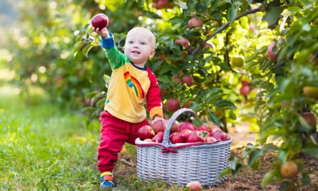 Hurra, die Apfelernte ist da
