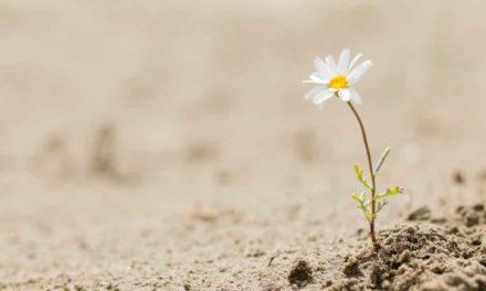 10 Tipps wie du deine Resilienz trainieren kannst