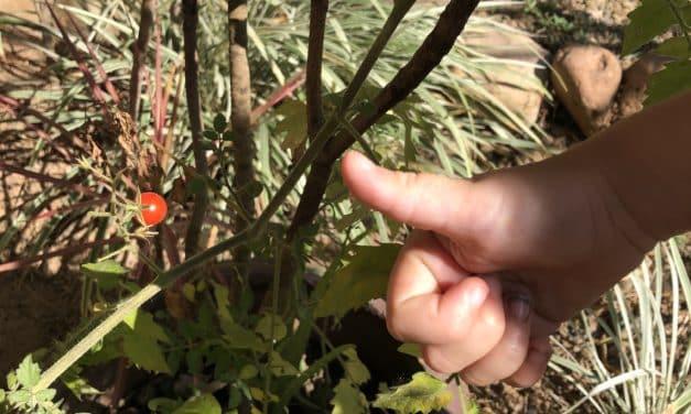 Kinder lieben Gartenarbeit: 7 fantastische Tipps