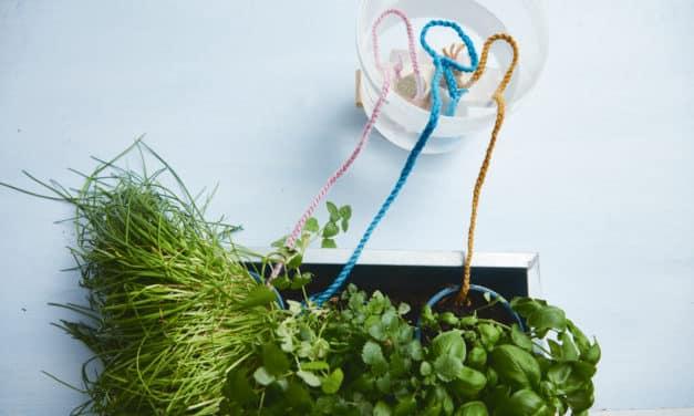 Balkon und Garten genießen: 3 fantastische  Neuerscheinungen