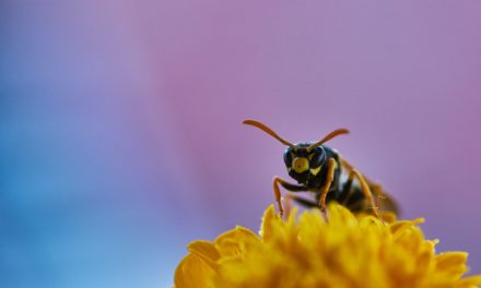 Autsch! Was tun gegen Wespen?