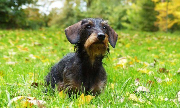Kind und Hund: Darf ich den streicheln? 7 Experten-Tipps für euch