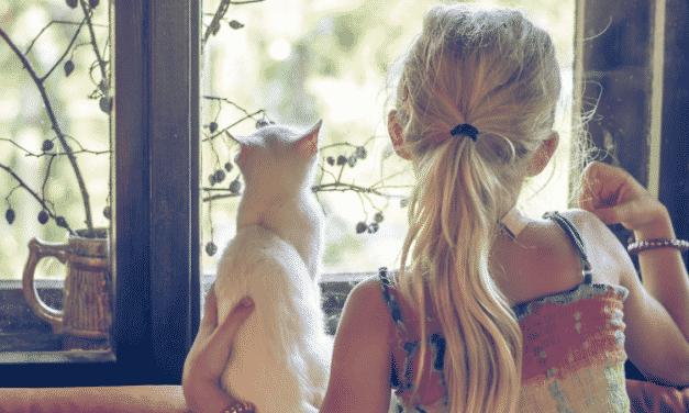 Papaaa, ich will eine Katze!